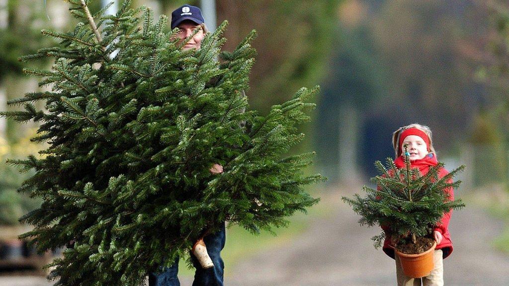 Как выбрать елку правильно на Новый год, живую или искусственную