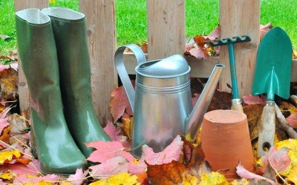 Что посадить в сентябре под зиму