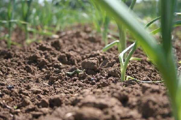 Плодородие почвы и способы повышения и восстановления