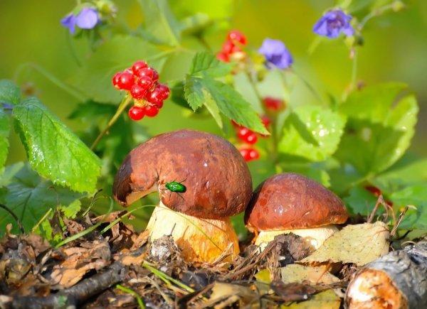 Сбор грибов в 2019 году - календарь и новое видео