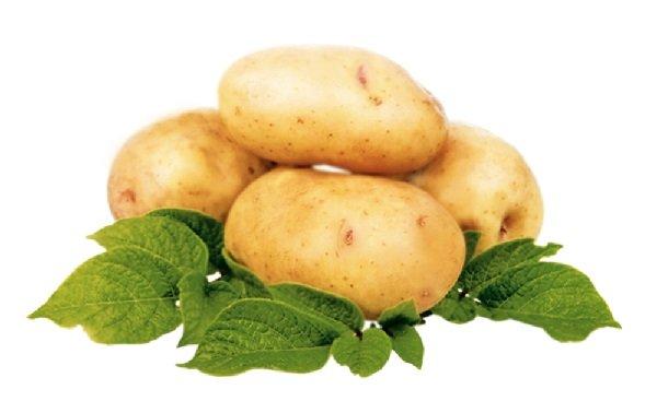Сорта белого картофеля с белой мякотью - описания, характеристики и фото