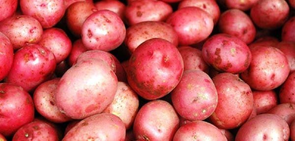 Красные сорта картофеля с красной или розовой кожурой, глазками - описания и фото