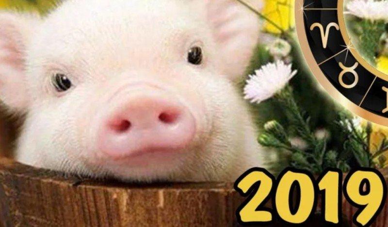 Салат Поросенок к Новому 2019 Году Кабанаи 5 пошаговых рецептов приготовления