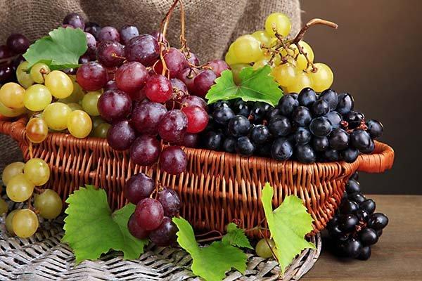 Сорта столового винограда с фото и описанием, вкусовые качества и характеристики