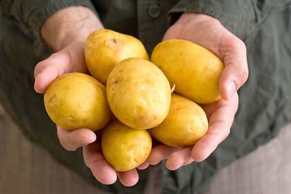 Желтые сорта картофеля с желтой мякотью и кожурой - описания с фото