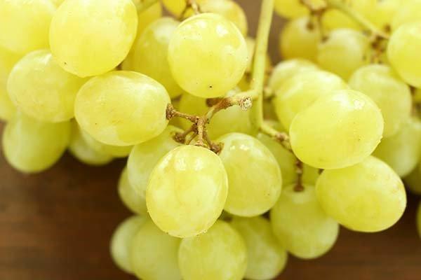 Лучшие сорта белого винограда - описание, характеристики и фото