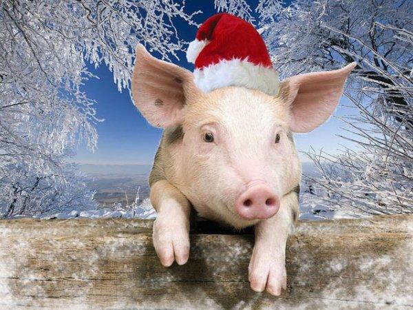 2019 год по восточному календарю год какого животного будет по гороскопу