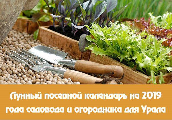 Лунный посевной календарь на 2019 год садовода и огородника для Урала