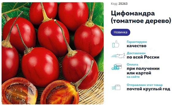 Как вырастить помидорное дерево в домашних условиях - Спрут, Цифомандра и другие разновидности, отзывы, фото и видео