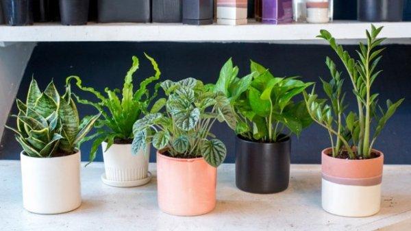 Покупка комнатных растений в вопросах и ответах с фото и видео