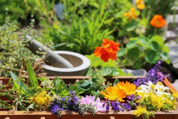 Клумба для выращивания пряных и лекарственных трав