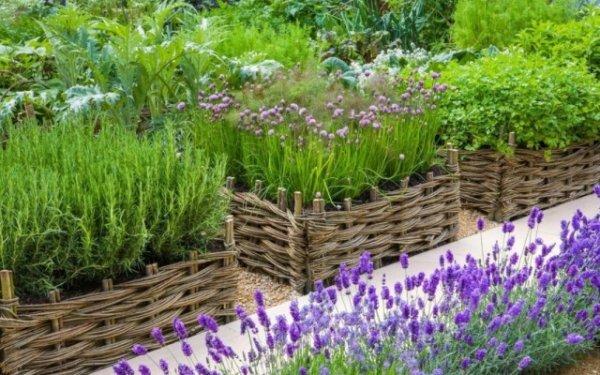 Список пряных трав с названиями и фото для дачи и сада