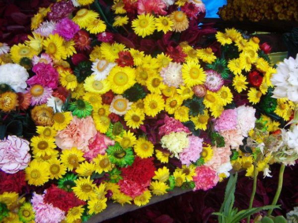 Сухоцветы и способы высушивания цветов, как засушить цветы и сделать гербарий