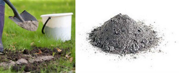Древесная и угольная зола как удобрение для картофеля, цветов, винограда и др.