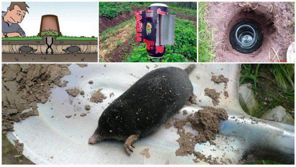 Борьба с кротами на огороде и как избавиться народными средствами, инсектициды, электронные изделия и др