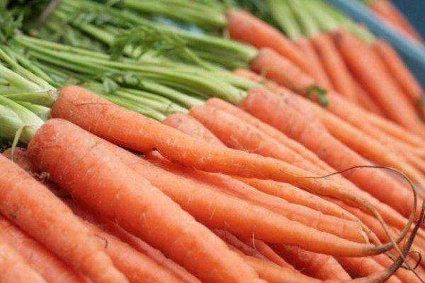 Посев моркови под зиму и посадка озимой моркови осенью