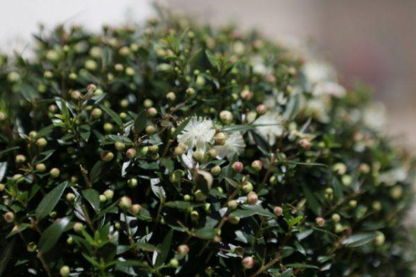 Растения для северной стороны дома - список названий с фото и видео