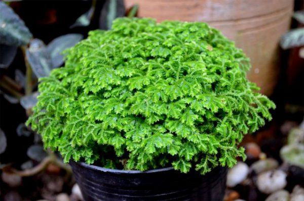 Лучшие растения для небольшой кухни - список названий с фото и видео