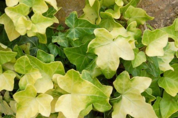 Растения фильтры для дома - какие растения лучше очищают воздух?