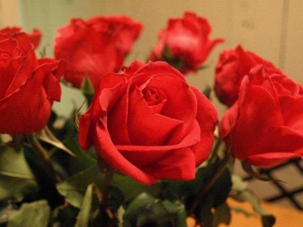 Как продлить жизнь розам? Уход за срезанными розами в букете