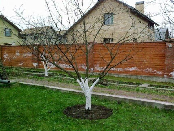 Сад после зимы - осматриваем, какие работы сделать ранней весной?