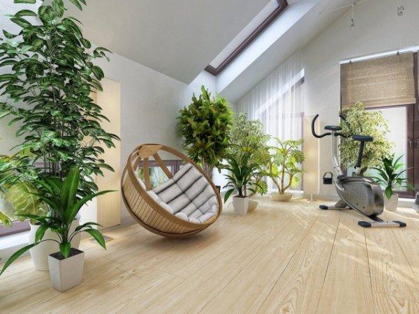 Контейнеры для комнатных деревьев — критерии выбора. Как выбрать кашпо для крупного растения?