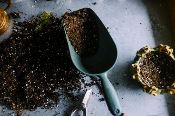 Частичная замена грунта для комнатных растений