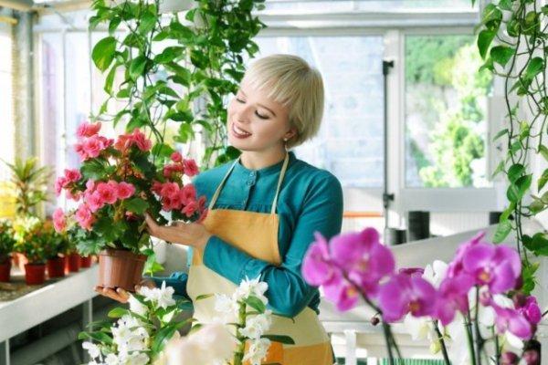 Где покупать комнатные растения? Особенности покупки комнатных растений