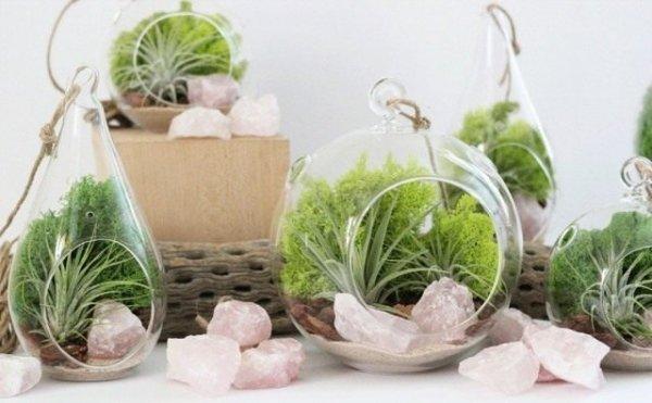 Террариумы для растений и флорариумы. Как устроить террариум для цветов?
