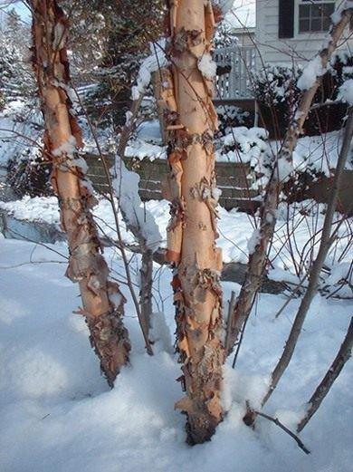 Где зимуют вредители сада и огорода