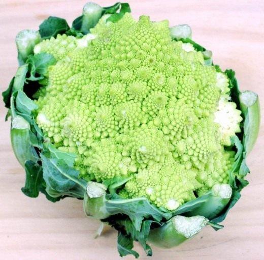 Брокколи – выращивание и уход за капустой в открытом грунте