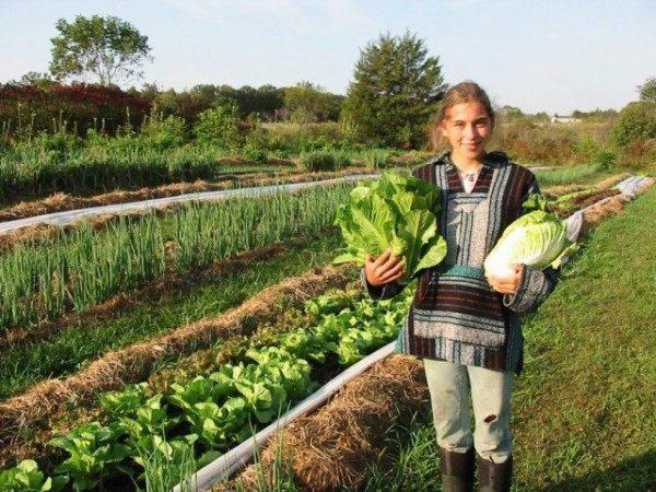 Органическое земледелие с чего начать огород без хлопот