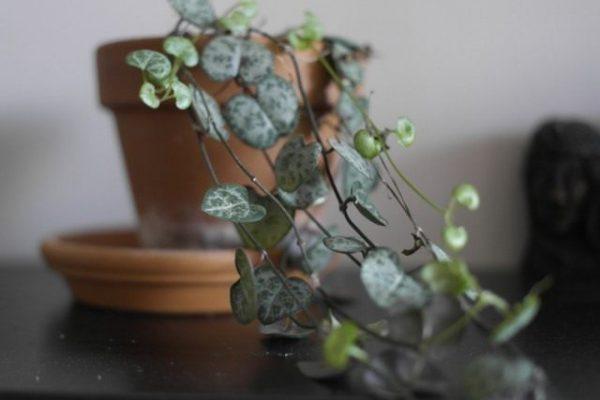 Быстрорастущие комнатные растения - список и фото ТОП-10