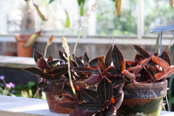 Комнатные растения с необычными рисунками на листьях - фото и названия
