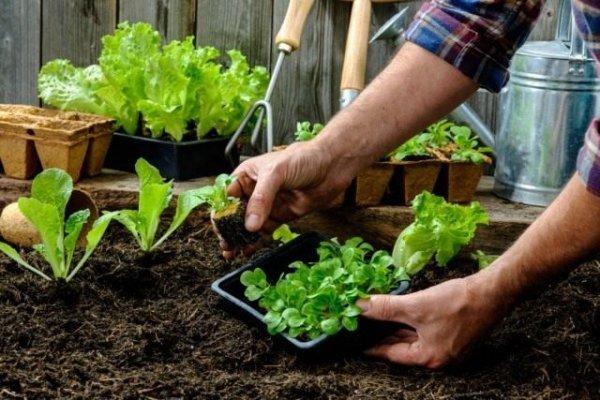 Календарь садово-огородных работ на май 2019