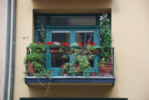 Цветы на балконе. Украшение цветами. Какие растения подобрать. Уход, выращивание. Фото