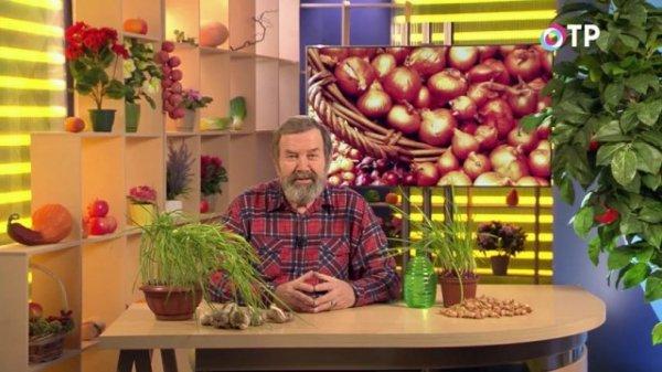 Что делать, если лук-севок и чеснок начали портиться?