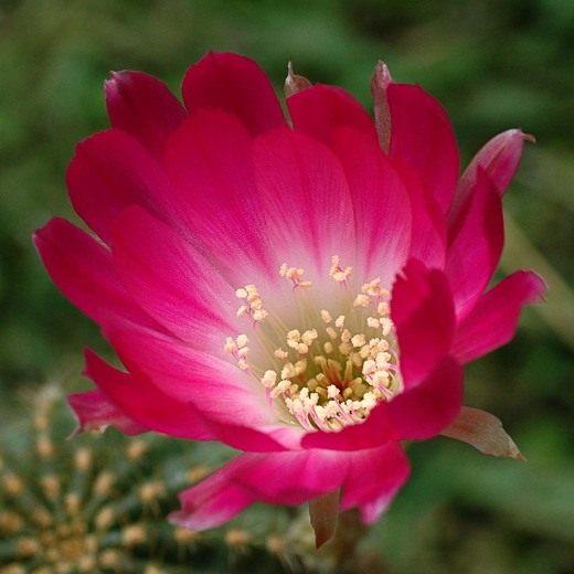Цветочный гороскоп и цветы по знакам зодиака