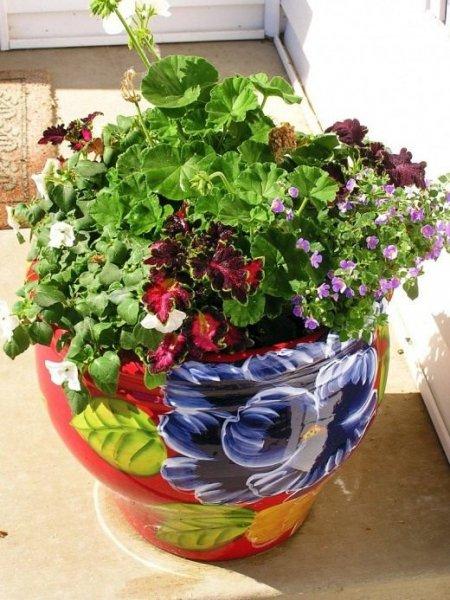 Горшок и кашпо для комнатных растений, правила выбора