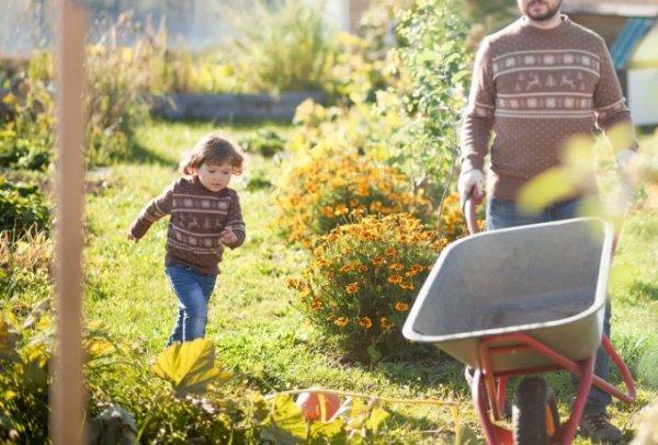 7 шагов по подготовке вашего огорода к зиме с фото и видео