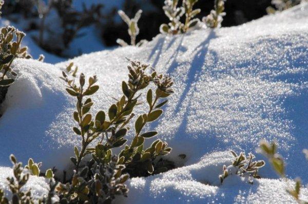 Бесснежная зима в саду и огороде - что сделать для защиты растений