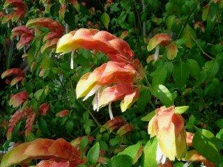Лучшие комнатные растения с яркими прицветниками - список названий с фото и видео