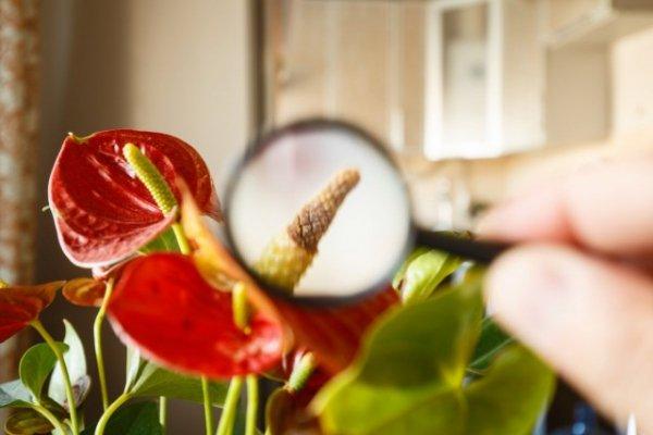 Погибает комнатное растение — 8 возможных причин. Освещение. Полив. Подкормки. Болезни и вредители