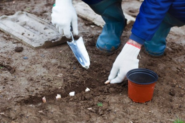 Что посадить под зиму - ТОП-25 культур для подзимних посевов