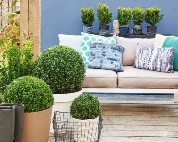 Как выращивать самшит в комнатных условиях? Фото и видео