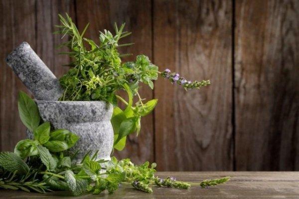 Пряные травы в саду и огороде фото и название, полезные свойства