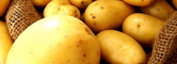 Картофель Лимонка - описание сорта с фото, посадка и уход