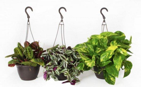 8 капризных комнатных растений, которые стоит выращивать новичкам. Список названий с фото и видео