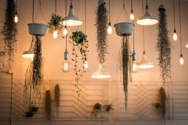 Декоративная подсветка для комнатных растений. Виды, приборы. Для каких растений. Фото и видео.