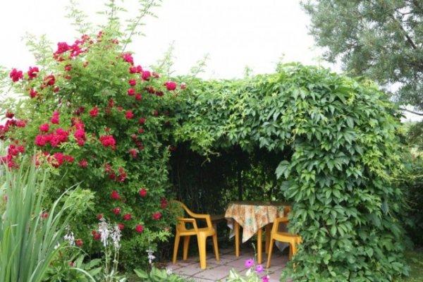 Как сделать беседку из живых деревьев и роз? Фото и видео